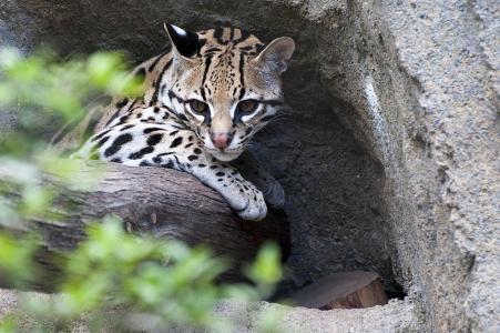 Italská konverzace: V zoo